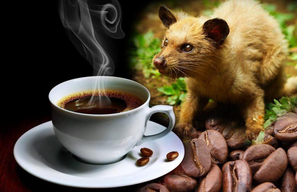 Le café le plus cher du monde